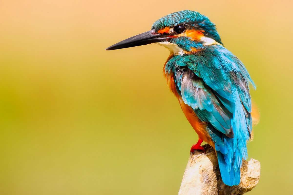 Best Wildlife Lenses